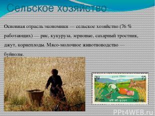 Сельское хозяйство Основная отрасль экономики — сельское хозяйство (76 % работаю