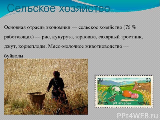 Сельское хозяйство Основная отрасль экономики — сельское хозяйство (76 % работающих) — рис, кукуруза, зерновые, сахарный тростник, джут, корнеплоды. Мясо-молочное животноводство — буйволы.