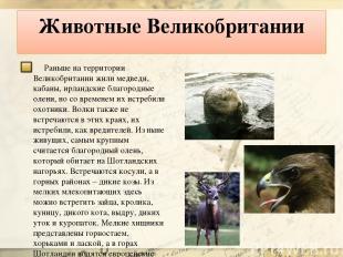 Животные Великобритании Раньше на территории Великобритании жили медведи, кабаны