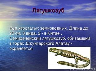 Лягушкозуб Род хвостатых земноводных. Длина до 25 см. 3 вида, 2 - в Китае , Семи