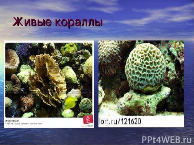 Живые кораллы