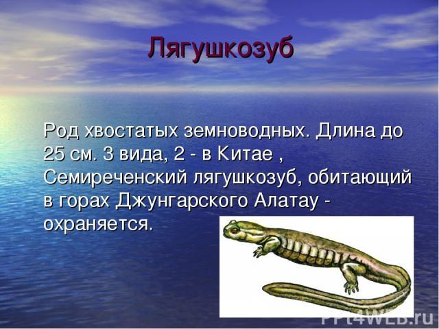 Лягушкозуб Род хвостатых земноводных. Длина до 25 см. 3 вида, 2 - в Китае , Семиреченский лягушкозуб, обитающий в горах Джунгарского Алатау - охраняется.