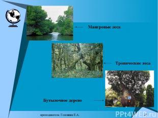 преподаватель: Головина Е.А. * Мангровые леса Тропические леса Бутылочное дерево
