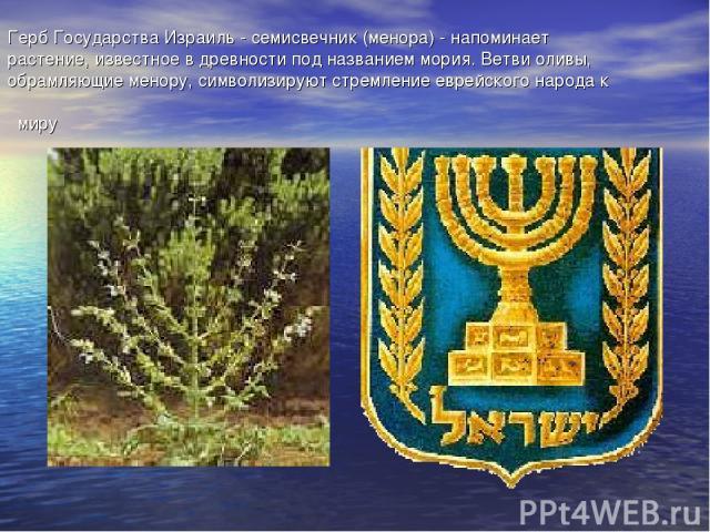 Герб Государства Израиль - семисвечник (менора) - напоминает растение, известное в древности под названием мория. Ветви оливы, обрамляющие менору, символизируют стремление еврейского народа к миру