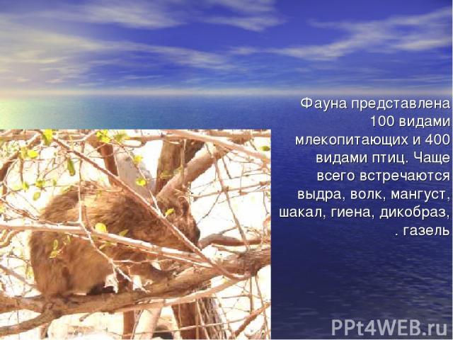 Фауна представлена 100 видами млекопитающих и 400 видами птиц. Чаще всего встречаются выдра, волк, мангуст, шакал, гиена, дикобраз, газель.