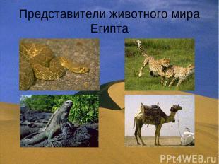 Представители животного мира Египта