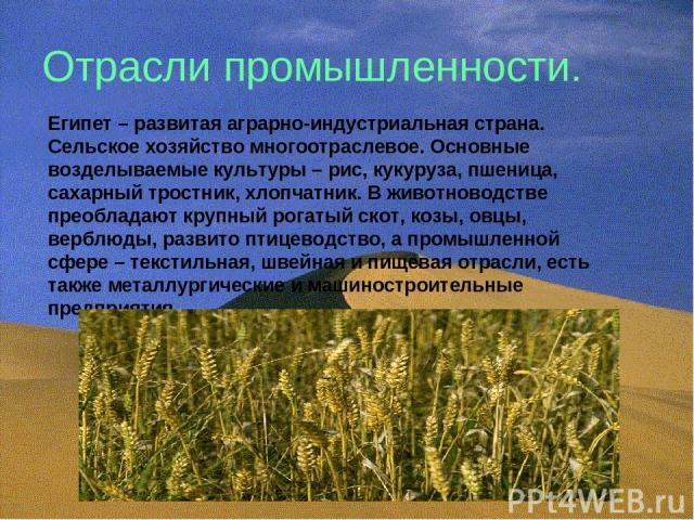 Отрасли промышленности. Египет – развитая аграрно-индустриальная страна. Сельское хозяйство многоотраслевое. Основные возделываемые культуры – рис, кукуруза, пшеница, сахарный тростник, хлопчатник. В животноводстве преобладают крупный рогатый скот, …