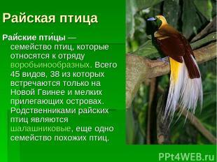 Райская птица Рай ские пти цы— семейство птиц, которые относятся к отрядуворобь
