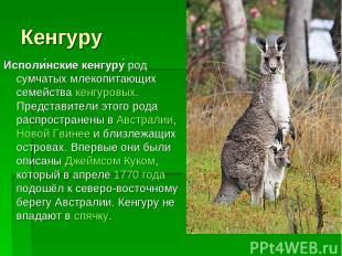 Кенгуру Исполи нские кенгуру род сумчатых млекопитающих семейства кенгуровых. Пр