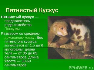 Пятнистый Кускус Пятни стый ку скус— представитель родасемействаПоссумы. Раз