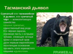 Тасманский дьявол Сумчатыйилитасманийский дьявол, или сумчатый чёрт— млекопит