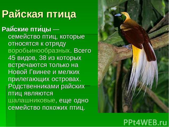 Райская птица Рай ские пти цы— семейство птиц, которые относятся к отрядуворобьинообразных. Всего 45 видов, 38 из которых встречаются только на Новой Гвинее и мелких прилегающих островах. Родственниками райских птиц являютсяшалашниковые, еще одно с…