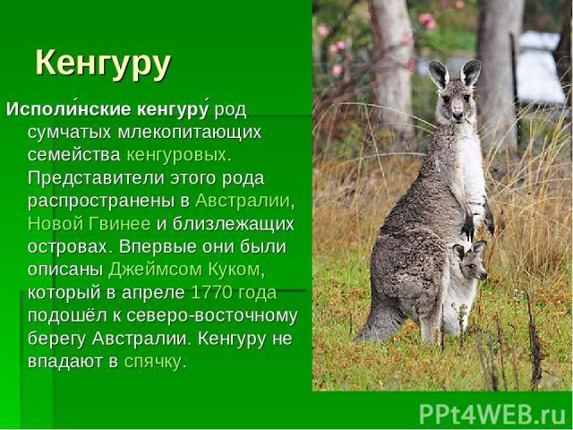Кенгуру Исполи нские кенгуру род сумчатых млекопитающих семейства кенгуровых. Представители этого рода распространены в Австралии, Новой Гвинее и близлежащих островах. Впервые они были описаны Джеймсом Куком, который в апреле 1770 года подошёл к сев…
