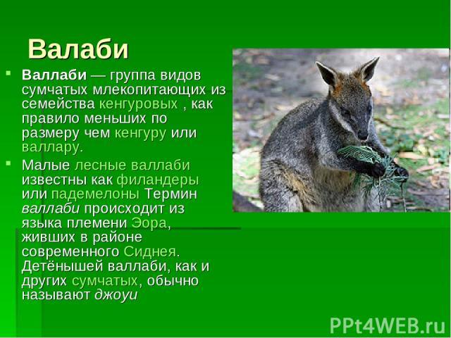 Валаби Валлаби— группа видов сумчатых млекопитающих из семейства кенгуровых , как правило меньших по размеру чем кенгуру или валлару. Малые лесные валлаби известны как филандеры или падемелоны Термин валлаби происходит из языка племени Эора, живших…