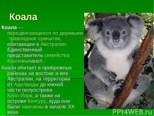 Коала Коала— передвигающееся по деревьям травоядное сумчатое, обитающее в Австралии. Единственный представитель семейства Коаловыеангл.. Коала обитает в прибрежных районах на востоке и юге Австралии, на территории от Аделаиды до южной части полуост…