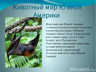 Животный мир Южной Америки Животный мир Южной Америки отличается исключительным