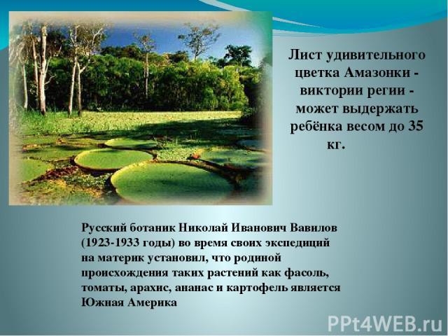 Лист удивительного цветка Амазонки - виктории регии - может выдержать ребёнка весом до 35 кг. Русский ботаник Николай Иванович Вавилов (1923-1933 годы) во время своих экспедиций на материк установил, что родиной происхождения таких растений как фасо…