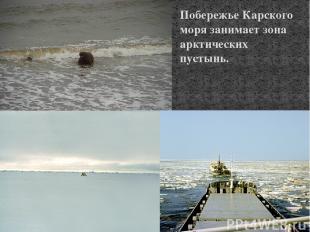 Побережье Карского моря занимает зона арктических пустынь.