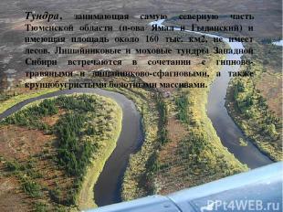 Тундра, занимающая самую северную часть Тюменской области (п-ова Ямал и Гыдански