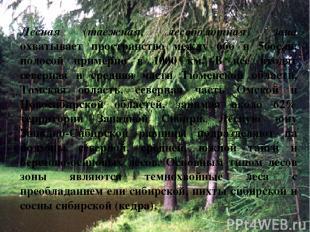 Лесная (таежная, лесоболотная) зона охватывает пространство между 66o и 56oс.ш.