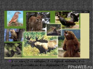 Животные тайги 1 — лось; 2 — кабарга; 3 — бурый медведь; 4 — рысь; 5 — соболь; 6