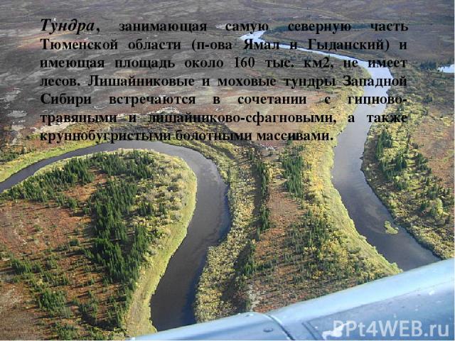 Тундра, занимающая самую северную часть Тюменской области (п-ова Ямал и Гыданский) и имеющая площадь около 160 тыс. км2, не имеет лесов. Лишайниковые и моховые тундры Западной Сибири встречаются в сочетании с гипново-травяными и лишайниково-сфагновы…