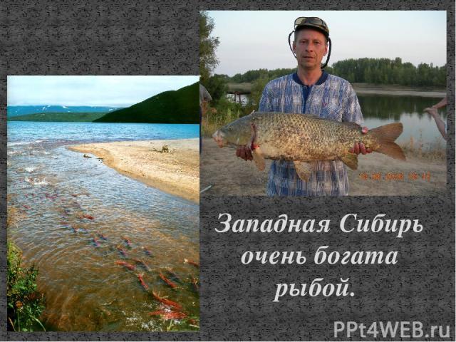 Западная Сибирь очень богата рыбой.