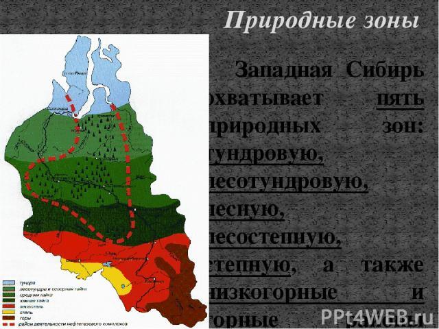 Западная Сибирь охватывает пять природных зон: тундровую, лесотундровую, лесную, лесостепную, степную, а также низкогорные и горные районы Салаира, Алтая, Кузнецкого Алатау и Горной Шории. Пожалуй, нигде на земном шаре зональность природных явлений …