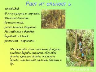 Растительность 1000видов В лесу сумрак и сырость. Растительность вечнозеленая, р