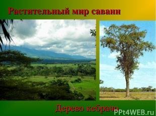 Растительный мир саванн Дерево кебрачо