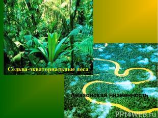 Сельва-экваториальные леса. Амазонская низменность