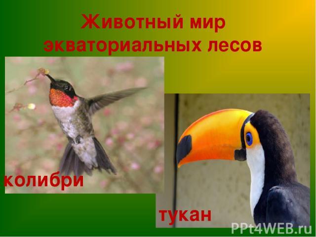 Животный мир экваториальных лесов колибри тукан