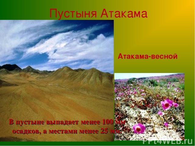 Пустыня Атакама В пустыне выпадает менее 100 мм осадков, а местами менее 25 мм. Атакама-весной