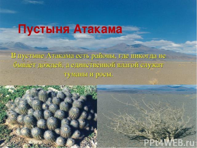 Пустыня Атакама В пустыне Атакама есть районы, где никогда не бывает дождей, а единственной влагой служат туманы и росы.