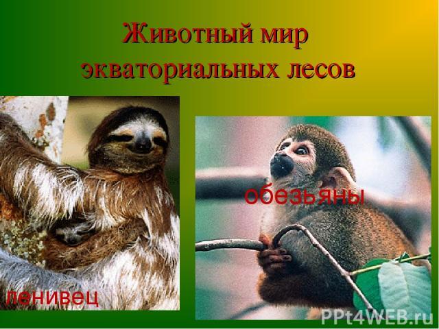 Животный мир экваториальных лесов ленивец обезьяны