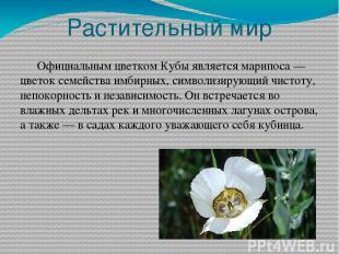 Растительный мир Официальным цветком Кубы является марипоса— цветок семейства и