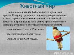Животный мир Национальной птицей Кубы является кубинский трогон. К отряду трогон