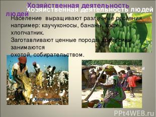 Хозяйственная деятельность людей Хозяйственная деятельность людей Бананы Хлопчат
