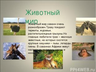 Животный мир Животный мир саванн очень разнообразен.Траву поедают термиты, мурав