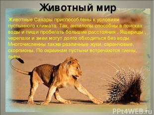 Животный мир Животные Сахары приспособлены к условиям пустынного климата. Так, а