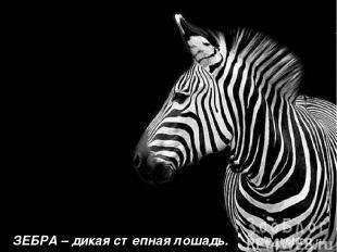 ЗЕБРА – дикая степная лошадь.