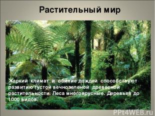Растительный мир Жаркий климат и обилие дождей способствуют развитию густой вечн
