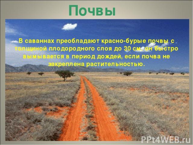 Почвы В саваннах преобладают красно-бурые почвы с толщиной плодородного слоя до 30 см. он быстро вымывается в период дождей, если почва не закреплена растительностью.