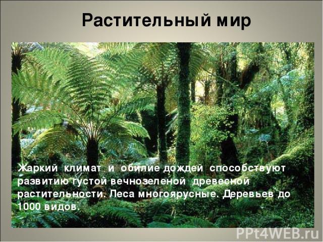 Растительный мир Жаркий климат и обилие дождей способствуют развитию густой вечнозеленой древесной растительности. Леса многоярусные. Деревьев до 1000 видов.