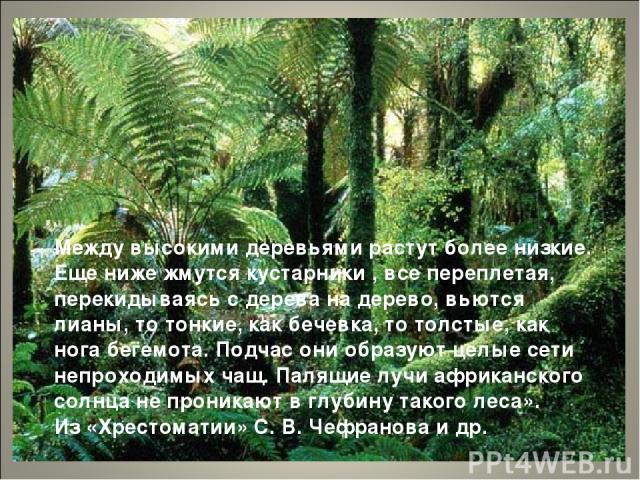 Между высокими деревьями растут более низкие. Еще ниже жмутся кустарники , все переплетая, перекидываясь с дерева на дерево, вьются лианы, то тонкие, как бечевка, то толстые, как нога бегемота. Подчас они образуют целые сети непроходимых чащ. Палящи…