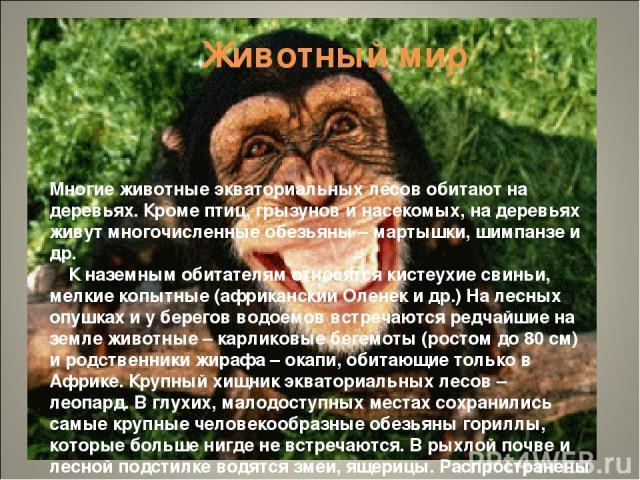 Животный мир Многие животные экваториальных лесов обитают на деревьях. Кроме птиц, грызунов и насекомых, на деревьях живут многочисленные обезьяны – мартышки, шимпанзе и др. К наземным обитателям относятся кистеухие свиньи, мелкие копытные (африканс…