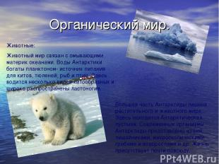 Органический мир. Животные: Животный мир связан с омывающими материк океанами. В