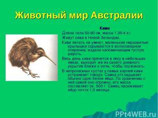 Животный мир Австралии Киви Длина тела 50-80 см, масса 1,35-4 кг. Живут киви в Н