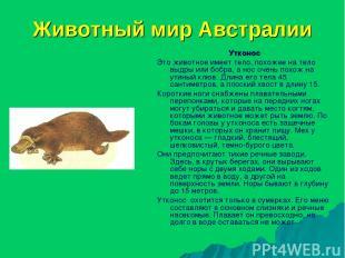 Животный мир Австралии Утконос Это животное имеет тело, похожее на тело выдры ил