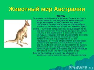 Животный мир Австралии Кенгуру Это очень своеобразное животное. Даже в зоопарке